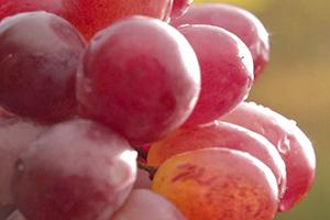 Agua de uva